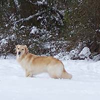 ellie in snow 2016